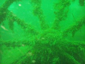 Per. Norge.Gudrun 05-06-2008 041 (13)